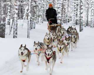 Husky safaris in Santa Claus Village in Rovaniemi in Lapland