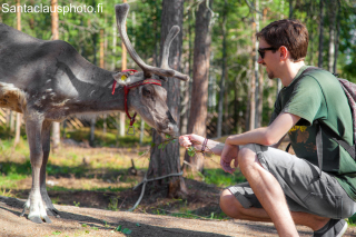 Meet the reindeer of Santa Claus in winter and summer in Santa Claus Village in Rovaniemi in Lapland